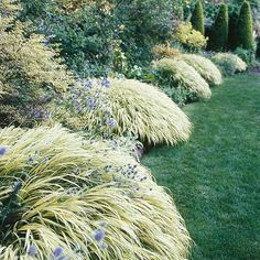 Best Plants for Landscape Edging Japanese forestgrass. One of the few grasses that thrives in shade, Japanese forest grass forms compact mounds of gracefully arching foliage. It's an amazing accent along the edges of a bed or border. Perfect Plants, Cool Plants, Best Perennials, Shade Perennials, Flowers Perennials, Landscape Edging, Ornamental Grasses, Ornamental Grass Landscape, Tall Grasses