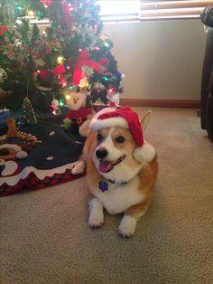 🎄Milo LOVES christmas