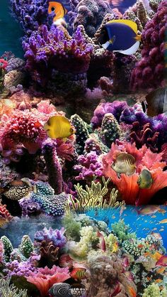 Fishy's swimming in Coral Reef Under The Water, Life Under The Sea, Underwater Animals, Ocean Underwater, Scary Ocean, Beautiful Sea Creatures, Beneath The Sea, Ocean Creatures, Sea Fish