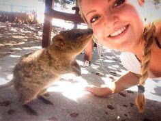 #socute #quokka #selfie #rottnestisland #happy #keeponsmiling #smile #little #paws #west #australia #stillinlove #kiss #wetnose #beautifulday #goodtimes #cutest #animal by julialaschin http://ift.tt/1L5GqLp