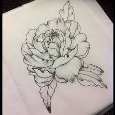 Image result for peony line drawing