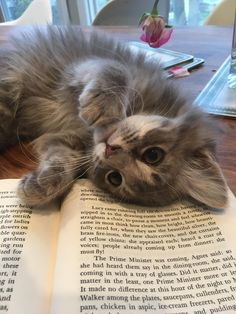 Cat Care Top Tips And Advice. All these things you get as a cat owner. Cute Cats And Kittens, I Love Cats, Crazy Cats, Cool Cats, Kittens Cutest, Fluffy Kittens, Pretty Cats, Beautiful Cats, Animals And Pets