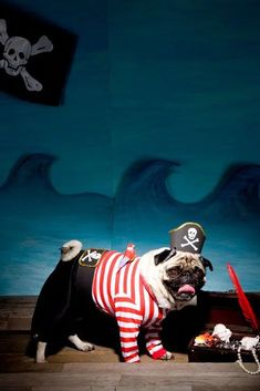 pictures of PUGS in costume! where are the pugs going? a halloween party? Pugs In Costume, Diy Dog Costumes, Pet Halloween Costumes, Dog Halloween, Costume Ideas, Dog Pirate Costume, Puppy Costume, Halloween Stuff, Happy Halloween