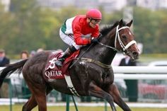 He was the best european horse