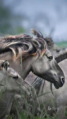 Horses of my dreams❤