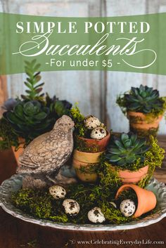Do you love the look of succulents? Make your own simple potted succulent arrangement for under $5 with my easy tutorial. They are easy and budget friendly!