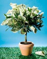 Made this money tree for a retirement gift gifts for Indoor plant gift ideas