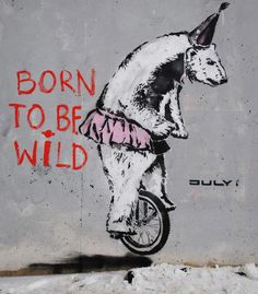 Born to be wild. Powerful Street Art