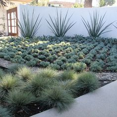 1000 images about home projects on pinterest water for Low water landscaping plants