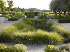 Bioretention basin - Medlock Ames Tasting Room - Plants: Built: 2009-2011The design transforms a historical, defunct 1920\'s gas station and impermeable lot into an example of hydrologically focused, ecologically reflective design which accommodates a tasting room, an organic garden, and a farm st...