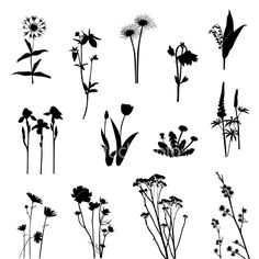 View top quality illustrations of Wild Flowers Vector Silhouette. Find premium, high-resolution illustrative art at Getty Images. Silhouette Tattoos, Flower Silhouette, Silhouette Vector, Pretty Tattoos, Beautiful Tattoos, Cover Up Tattoos For Women, Petit Tattoo, Inspiration Artistique, Wildflower Tattoo