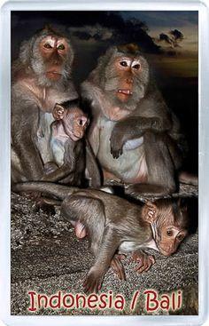 $3.29 - Acrylic Fridge Magnet: Indonesia. Bali. Monkeys Family