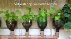 Bottle Garden The Incredible Self Watering Pop Grow System! - YouTube