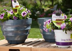 Add some quick color to your garden. Try these tips, including Drop N Blooms.