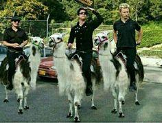 My knights atop white llamas? Lol