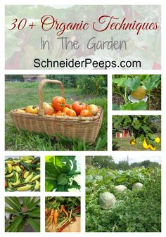 Using organic techniques in the garden is really about balance. Here are 30+ articles to help you get started on your gardening journey.