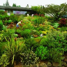 By replacing a normal lawn with a mixture of perennials and shrubs you can create a lush space while using half the water