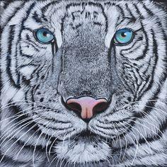White tiger, coloured pencil by Sarahharas07.deviantart.com on @deviantART