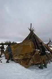 Image result for Reindeer Nomads