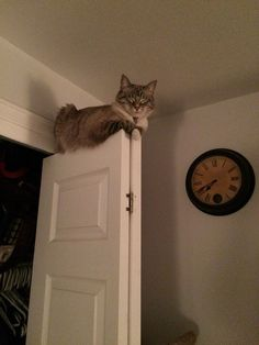 """""""Oh, you wanted to close the closet door?"""" 