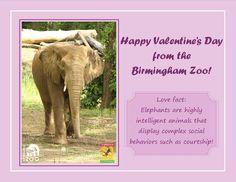 birmingham zoo valentine day