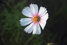 Flowers, Wildflowers and other images in my South Carolina Backyard - Amateur Photography