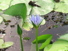 flower by eggegde