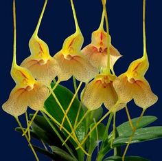 Different Kinds Of Orchids   mostbeautifulorchid.com