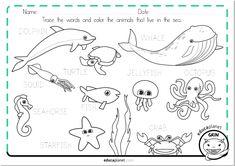deldín, tortuga ballena, calamar medusa pulpo estrella de mar cangrejo pez colorea #bilingüe #bilingual #ficha preescolar #preschool