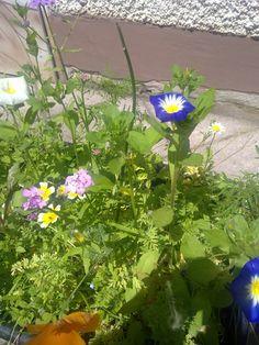Balkonkasten-Blumen-Mischung Herbs, Plants, Balcony, Trees, Herb, Flora, Plant, Planting