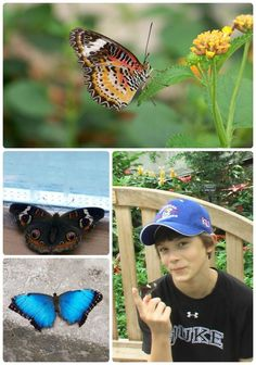 Awesome ideas of butterfly activities for kids!  Nature activities and learn about insects study: