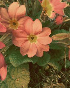 Flower_Power ✌