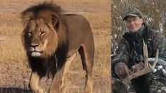 Cecil the lion backlash: Where is dentist Walter Palmer? -  NOW he knows what it is like to be HUNTED...