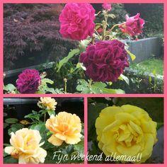 zo maar een compilatie van een paar bloemen