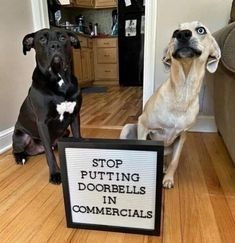 Funny Animal Memes, Dog Memes, Funny Dogs, Funny Animals, Cute Animals, Funny Memes, Animal Humor, Funny Pictures Images, Cool Pictures