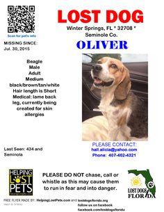 Lost Dog - Beagle - Winter Springs, FL, United States