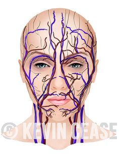 female face with vessels veins arteries and nerves for botox education - Acne Treatment Botox Forehead, Botox Face, Botox Brow Lift, Muscle Disorders, Facial Anatomy, Botox Alternative, Facial Aesthetics, Botox Injections, Botox Injection Sites