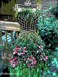 Playing with plants! I found this lovely little dress form at a local nursery. It's all dressed up with ajuga, creeping jenny, hens & chicks, mondo grass, and wire vine.