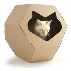 Geodesic dome. This is cool, which means my cats wouldn't go within 50 feet of it!