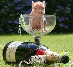 More Micro Pig Magic   Stylist Magazine