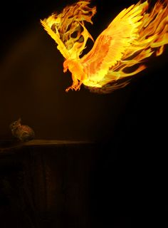 eagle of yahweh of fire