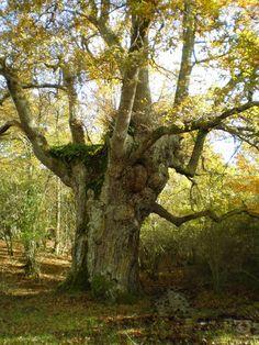 El bosc centenari de Munain-Okariz (Àlaba)  Paisajes para descubrir, de Raquel García @quelyg