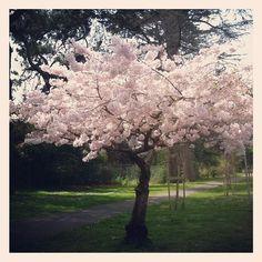 Springtime in Golden Gate park #sanfrancisco