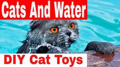 DIY Toys For Cats - Water Fontain Cats - Cats Drinking Water