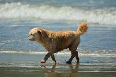 old beach dog Pet Photos, Dog Beach, New Zealand, Pets, Photography, Animals, Animals And Pets, Animales, Animaux