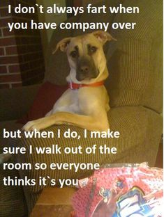 animal humor | rude animal jokes | Jokideo // Funny Pictures & Funny Jokes