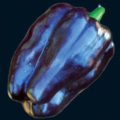 Purple Beauty -- Baker Creek Seeds rareseeds.com