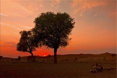 Farbenspiel in der omanischen Wüste
