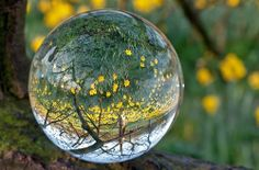 Glazen bol. Foto: Shutterstock