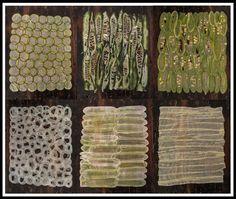 La main de Papyrus végétale naturelle par SpacesThingsEtcetera